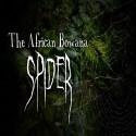 auralstimulation_the-african-bowana-spider_store